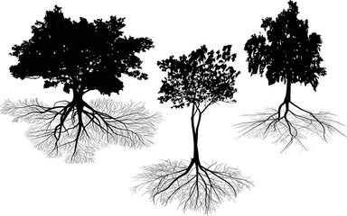 three isolated on white trees with roots silhouettes