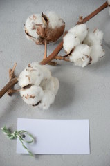 gift card on Valentine's Day with cotton flowers