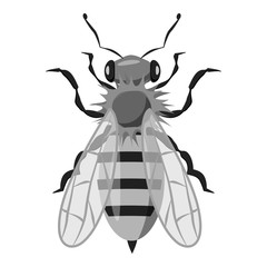 Insects bee icon. Gray monochrome illustration of insects bee vector icon for web