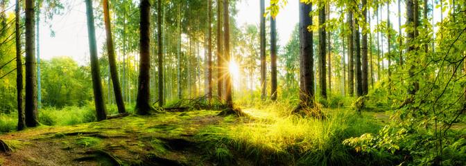 Wald im Herbst bei Sonnenaufgang, Panorama einer idyllischen Landschaft