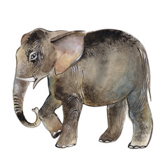 Elephant isolated on a white background, watercolor