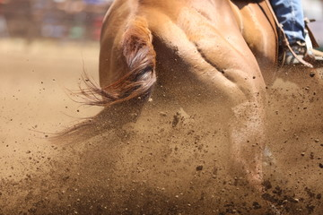 A close up view of a horse sliding in the dirt.  A large photography image with details of flying dirt.