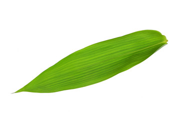Single Isolated Bamboo leaf texture