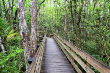 Boardwalk in a swampy area of Florida