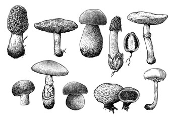 Vector, drawing, engraving, mushrooms.