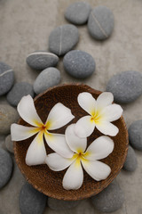 Fotobehang Spa frangipani in wooden bowl with spa stones on grey background.