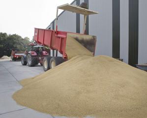 Grain harvest, dumping grain