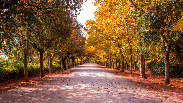 wooded path in autumn