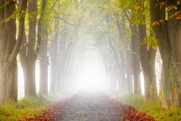 Allee mit Bäumen im Nebel