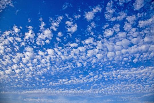 いわし雲、