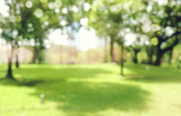 defocused bokeh background of  garden trees in sunny day Fototapete