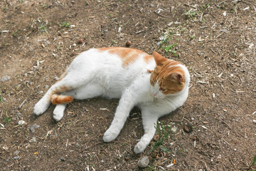 Cute cat is lying relaxed.