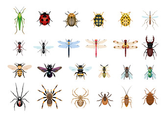 Vector,drawing, insect, bug illustration