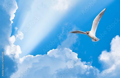 Wall mural seagull flying in the sun rays among the clouds