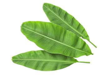Banana leaves isolated over white. Photo includes three CLIPPING