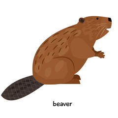 Brown beaver with unusual tail