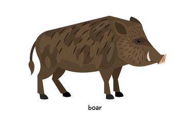 Thick wild boar standing