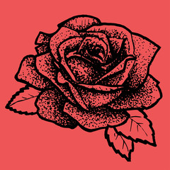 red rose vector art graphic