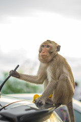 monkey sit top car. monkey sitting on car bonnet. and look through car windscreen .at Khao Sam Muk in thailand.