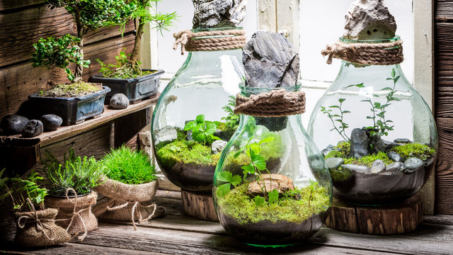 Stunning jar with piece of forest, save the earth concept