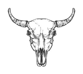 Vintage buffalo skull vector sketch. Bull animal head bones in hand drawn style.
