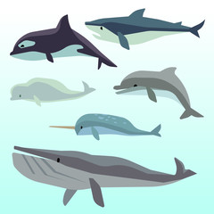 Whales and dolphins, marine underwater mammal, ocean animals flat vector set