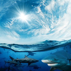 Beautiful cloudy divine background with sunlight and a lot of dangerous sharks underwater