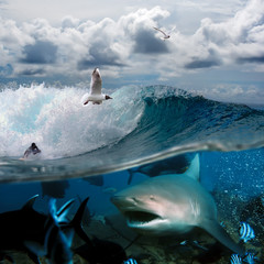 an ocean story with surfers and sharks