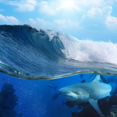 breaking ocean surface in sunlight and wild shark underwater