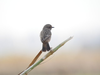 Bird looking at blurred background