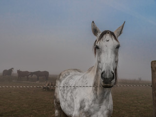 White Horse Standing on a Paddock
