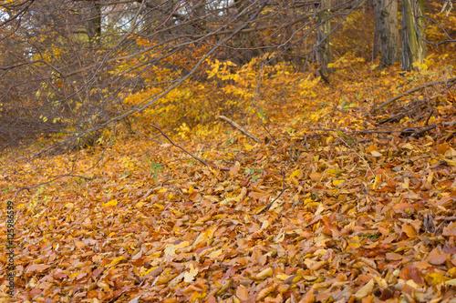 Herbst im wald buntes laub laub f llt auf den boden for Boden herbst 2016
