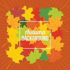 Autumn design background, vector illustration.