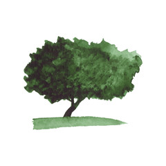 Abstract watercolor tree in green colors on white background. Vector Illustration.