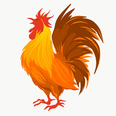Vector illustration of the red rooster
