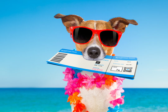 chek in boarding pass summer dog