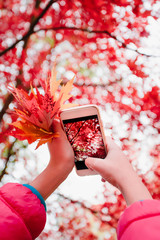 Taking a photo of brilliant red autumnal tree