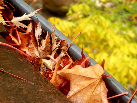 Gutter full of leaves following leaf fall in Autumn