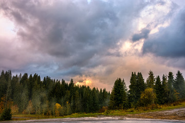 few yellowed trees near spruce forest in foggy mountains under cludy evening sky