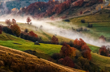 cold morning fog in the rural area of Carpathian mountain range at sunrise. green grass and trees with red foliage on the hillside meadow