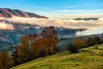 golden hot sunrise with cold morning fog in rural area of Carpathian mountain range. green grass and trees with colorful foliage on the hillside meadow