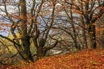 trees with foliage in autumn forest