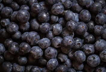 Blueberry - Fresh Blueberries close up - Organic Superfood