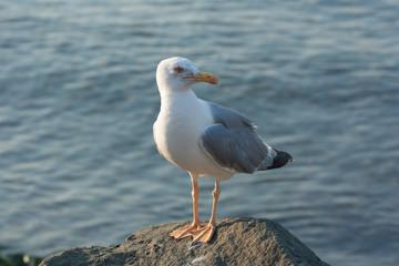 Angry bird on the sea