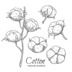 Hand drawn cotton flowers .