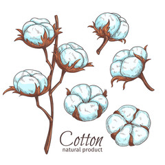 Hand drawn color cotton flowers