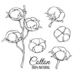 Hand drawn decorative cotton flowers