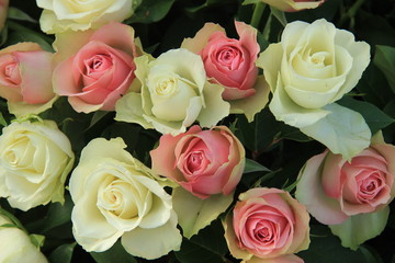White and pink wedding roses