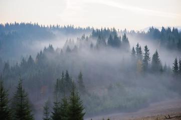 Rano w górach. - 126033515