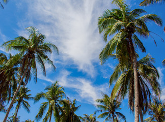 Tropical landscape from summer vacation with coco palm trees